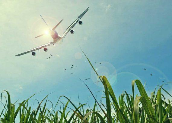 Landing-Page – Warum? phase grün