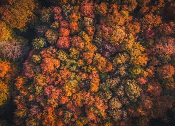 Keyword Chaos – Man sieht den Wald vor lauter Bäumen nicht.