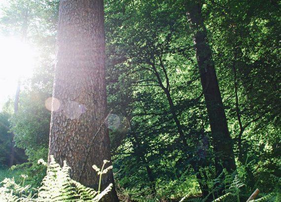 Klimaneutrale Industrienation – Bäume für unsere Erde