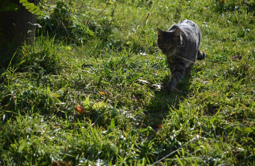 Cat Content – wie Katzen das Internet erobern