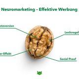 """Das Bild zeigt eine offene Walnuss, die einem Gehirn ähnelt. Oben im Bild ist in grüner Schrift der Titel """"Neuromarketing - Effektive Werbung"""" zu lesen. Die Walnuss ist mit vier Begriffen beschriftet. Unten im Bild erkennt man das phase grün Logo."""