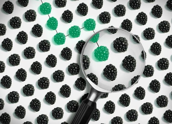 Viele Brombeeren sind gleichmäßig verteilt und das Drittanbieter-Tracking über Google sind mit grünen Brombeeren markiert, die Mitten auf dem Weg aufhören. Eine Lupe vergrößert den Ausschnitt wo das Tracking endet.