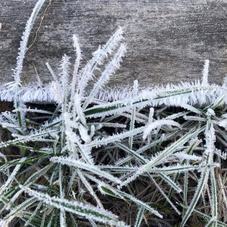 #natur #schönheit  #gefroren #frozen #gras #grass #grass #grün #nature #inspiration #fotoarchiv #photoarchive #phasegrün #phasegrünfoto #werbeagentur #Saarland #onlinemarketing #kreation #onlinemarketingkreation