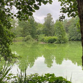#natur #schönheit  #see #lake #green #grün #ruhe #quiet #wanderlust #nature #inspiration #fotoarchiv #photoarchive #phasegrün #phasegrünfoto #kreativagentur #werbeagentur #Saarland #onlinemarketing #kreation #onlinemarketingkreation